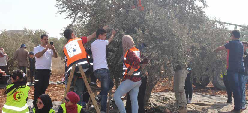 طاقم اسعاف برج اللقلق يساعد المزارعين قطف الزيتون في قرية عقابا